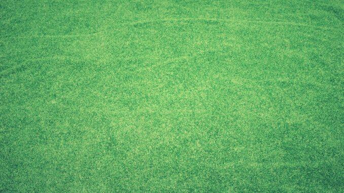 Rasen in Schuss halten