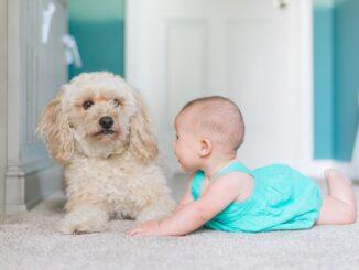 Hund und King zusammenleben
